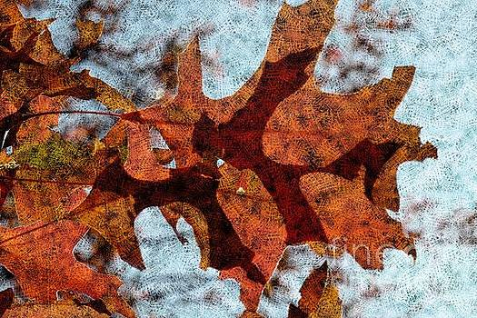 Autumn Leaves 9 by Jean Bernard Roussilhe