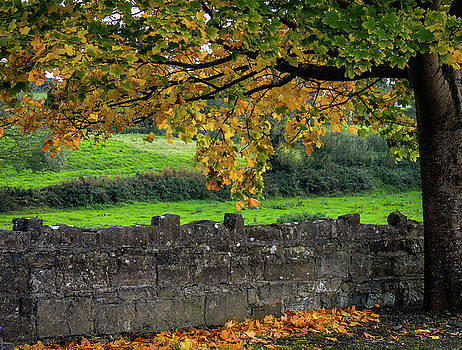 Autumn Leaves and Rock Wall by James Truett