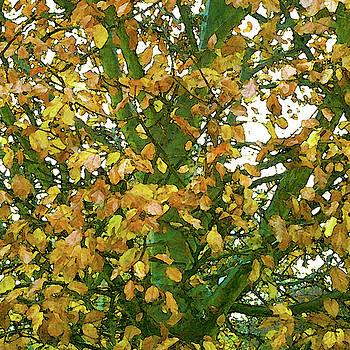 Autumn Leaves by Anne Kotan