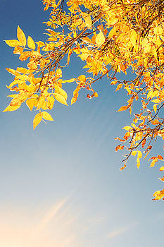 Autumn Leaves by Asbed Iskedjian