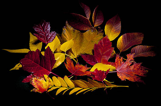 Autumn Leaves by Barry C Donovan