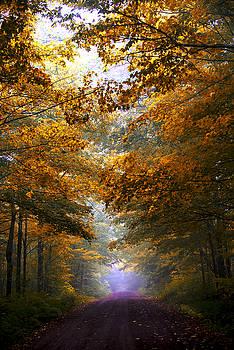 Autumn Leaves by Bill Frische