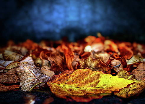 Autumn Leaves by Bob Orsillo