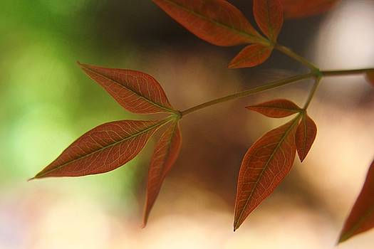 Autumn Leaves by Carol Welsh