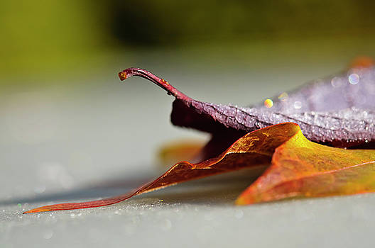 Christine Kapler - Autumn leaves