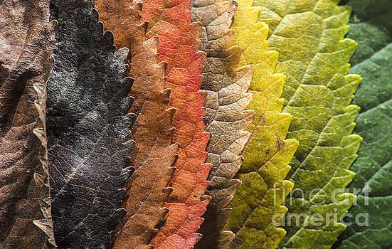 Autumn leaves by Deyan Georgiev