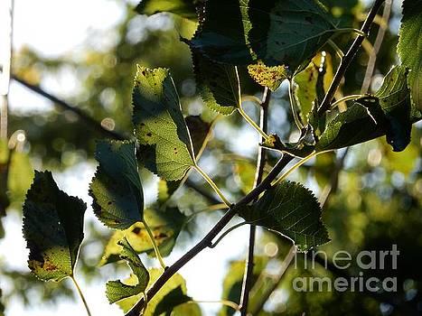 Autumn Leaves by Diamante Lavendar