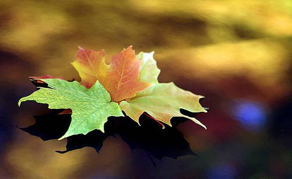 Autumn Leaves  by Dmitriy Margolin