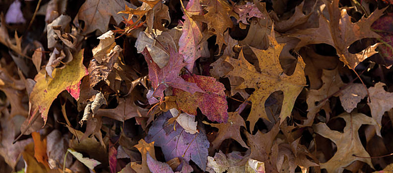 Autumn Leaves by Don Hill