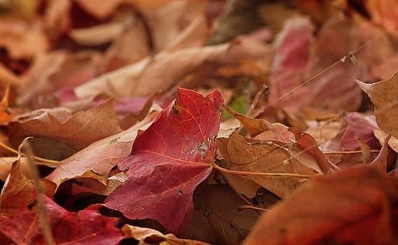 Garvin Hunter - Autumn Leaves