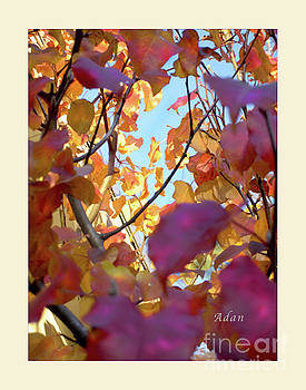 Felipe Adan Lerma - Autumn Leaves in Blue Sky