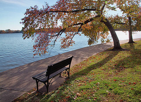 Autumn leaves in DC by Jack Nevitt