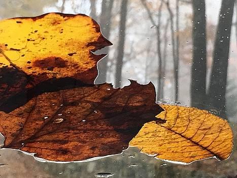Autumn Leaves In Fog by Randy Muir