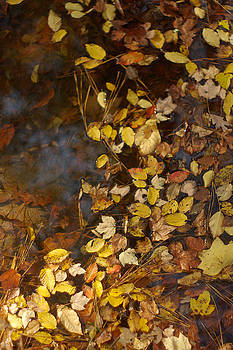 Autumn Leaves In Water by Suzanne Powers
