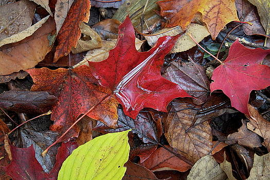 Autumn Leaves by John-Paul Fillion