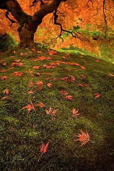 Autumn Leaves by Lori Grimmett