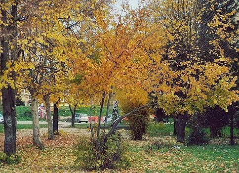 Autumn leaves by Marija Djedovic