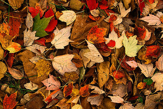 Autumn Leaves Must Fall by Greg Matchick