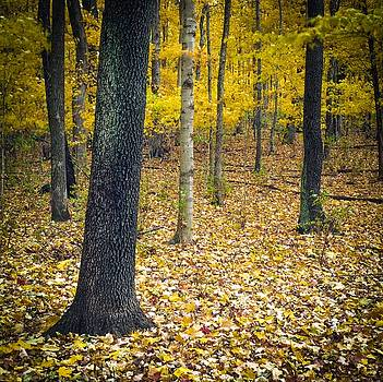 Autumn Leaves - Nashville by Samuel M Purvis III
