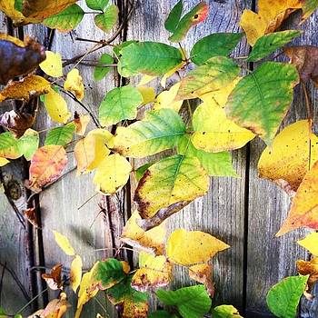 Autumn Leaves #nature #leaves #fall by Shyann Lyssyj