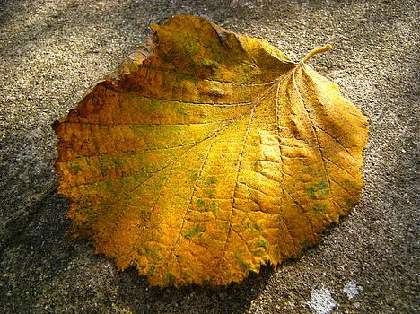 Autumn leaves by Neven Spirkoski