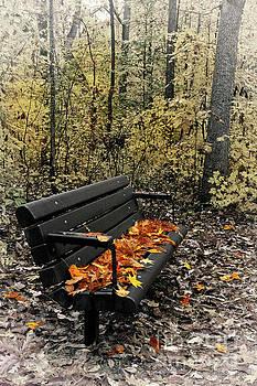 Dan Carmichael - Autumn Leaves on a Bench