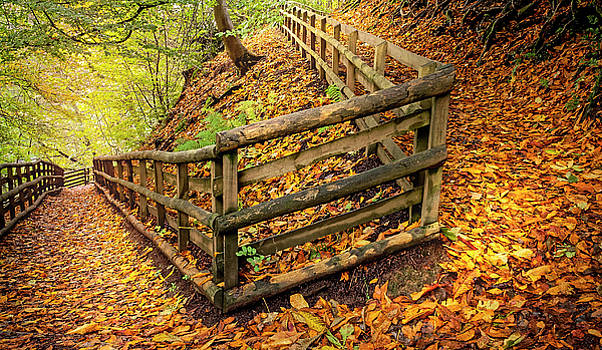 Autumn Leaves on a Zig Zag Path by Alex Saunders
