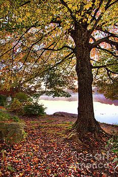 Dan Carmichael - Autumn Leaves on the Blue Ridge Parkway