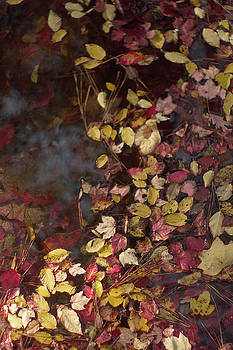 Autumn Leaves On The Water by Suzanne Powers