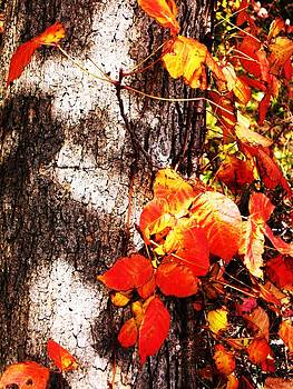 Autumn Leaves on Tree 1 by Brad Scoggins
