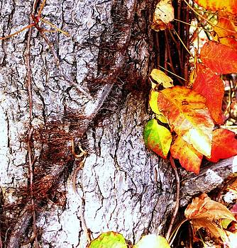 Autumn Leaves on Tree 3 by Brad Scoggins