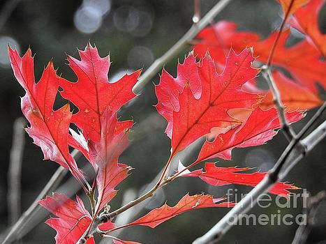 Autumn Leaves by Peggy Hughes