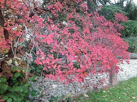 Autumn Leaves Photo 778 by Julia Woodman