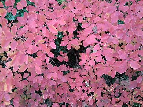 Autumn Leaves Photo 780 by Julia Woodman