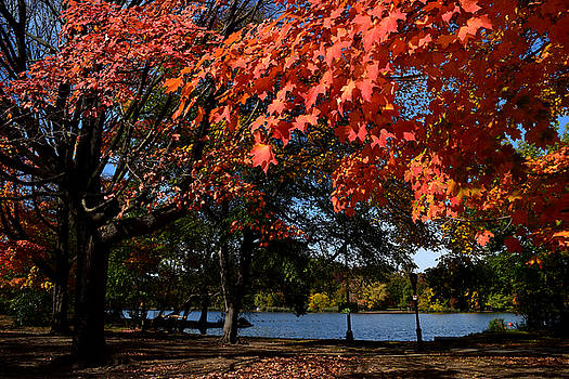 Autumn Leaves Prospect Park Brooklyn by Diane Lent