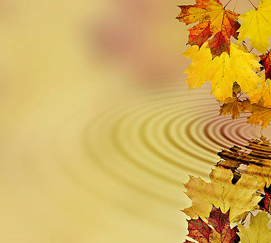 Autumn leaves by Roberto Rizzo