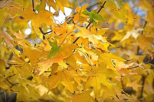 Autumn Leaves Too by CarolLMiller Photography
