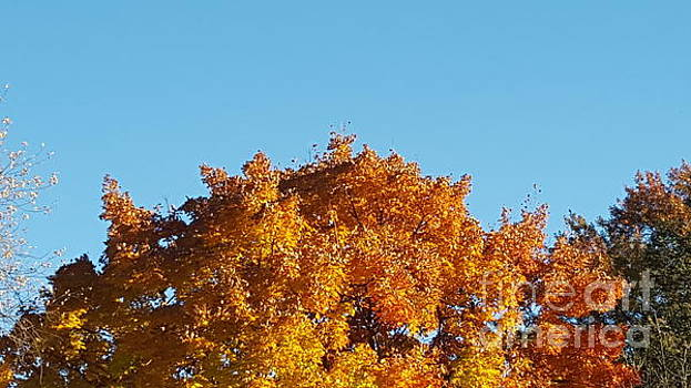 Autumn Leaves Treetop Blue Sky by Michelle Jacobs-anderson