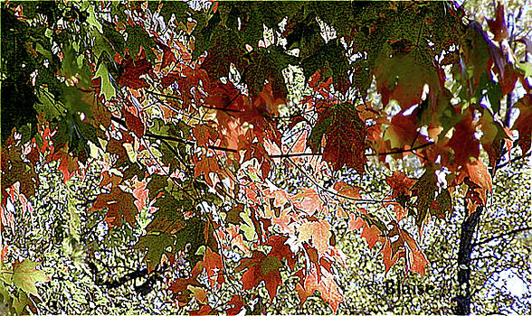 Autumn Leaves by Yvonne Blasy