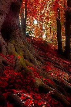Hannes Cmarits - autumn light