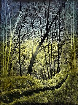 Autumn Light by Linda Clary