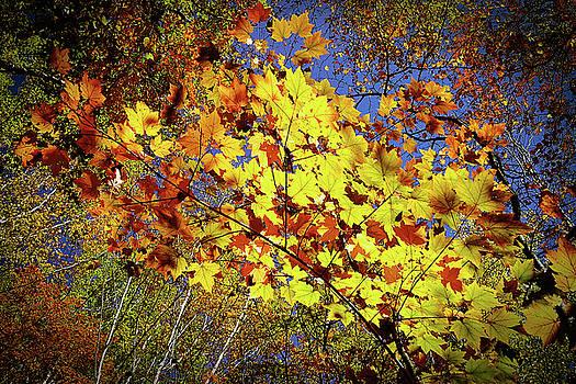Tatsuya Atarashi - Autumn Light