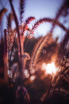 Autumn Lights by Amanda Wakefield