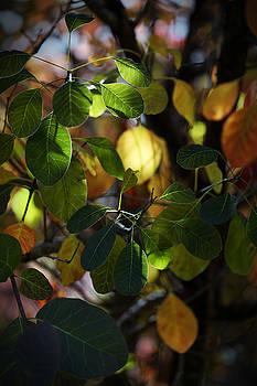 Jeremy Lavender Photography - Autumn Lights