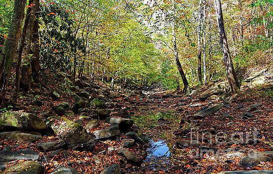 Paul Mashburn - Autumn Magical Colors