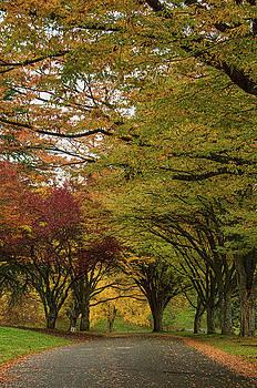 Marilyn Wilson - Suddenly Autumn