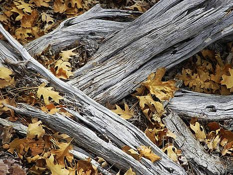 Autumn Mash by Robert Ball