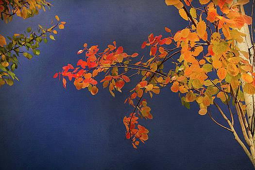 Autumn Matinee by Theresa Tahara