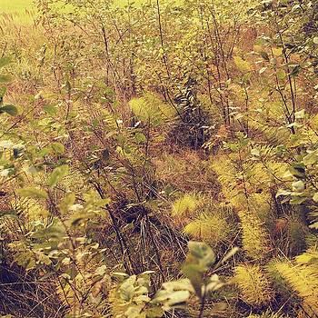 Autumn meadow by Roman Aj