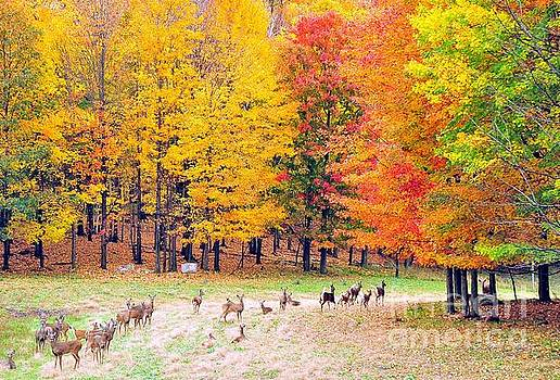 Autumn Meadow by Terri Gostola